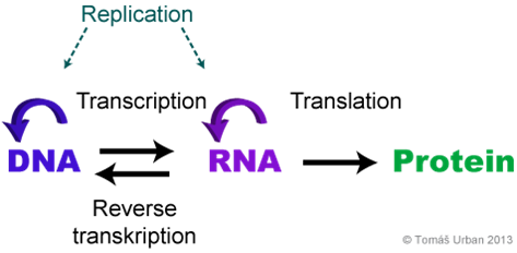 DNA to RAN